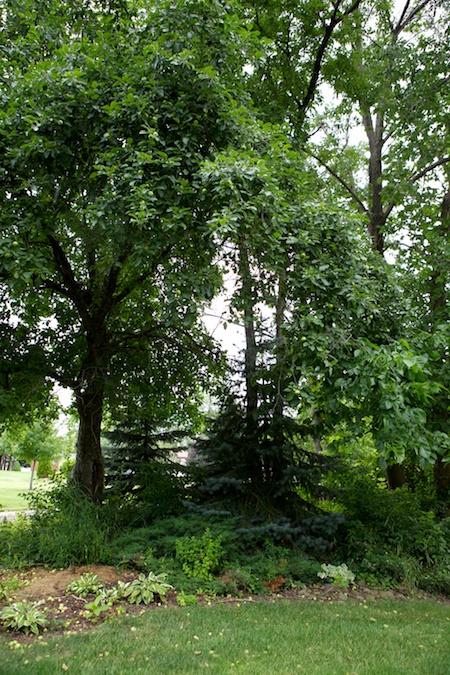 Gingers Garden 8