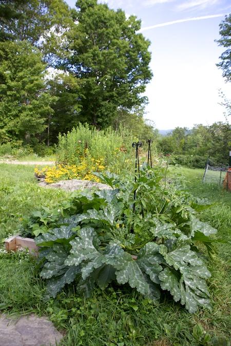 Jungle garden 1