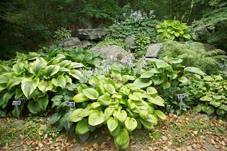 Augsta Gardens 9
