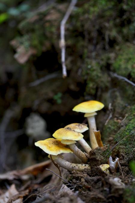 mushroom identification class 5