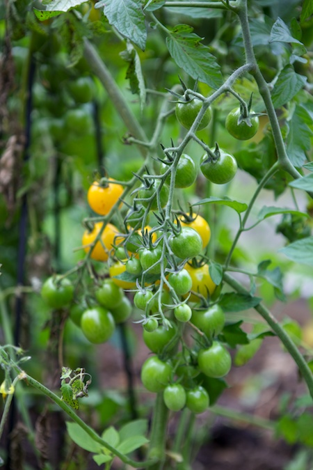 5x5 garden 2
