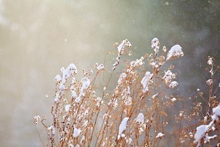 Snowing 2