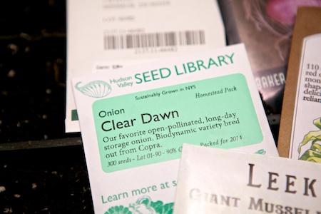starting onion seeds 3