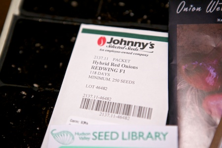 starting onion seeds 4