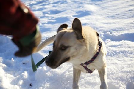 Tara in Snow 2