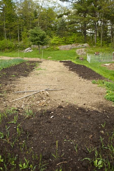 back garden (2)