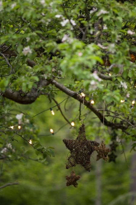 stars in tree 4
