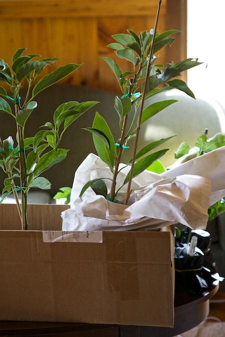 tropical houseplants 2