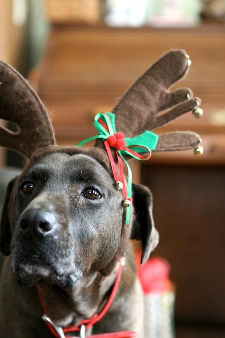 A Reindeer Chiots