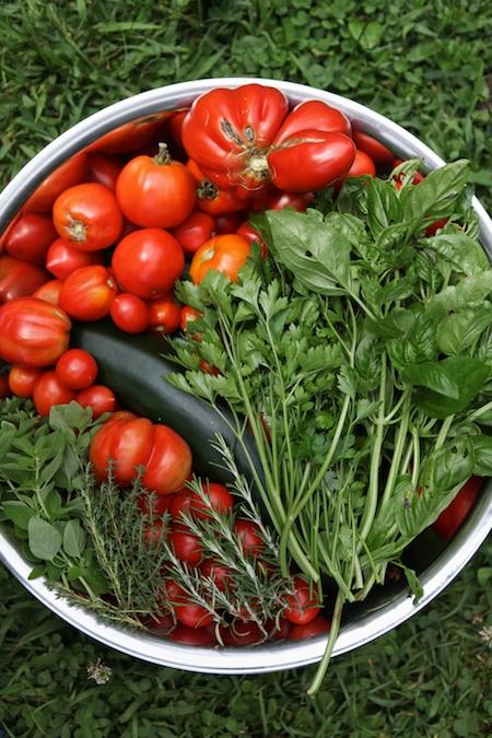 Tomato Harvest (1)