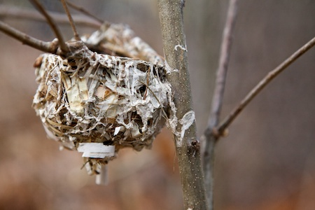 tiny Bird nest 1