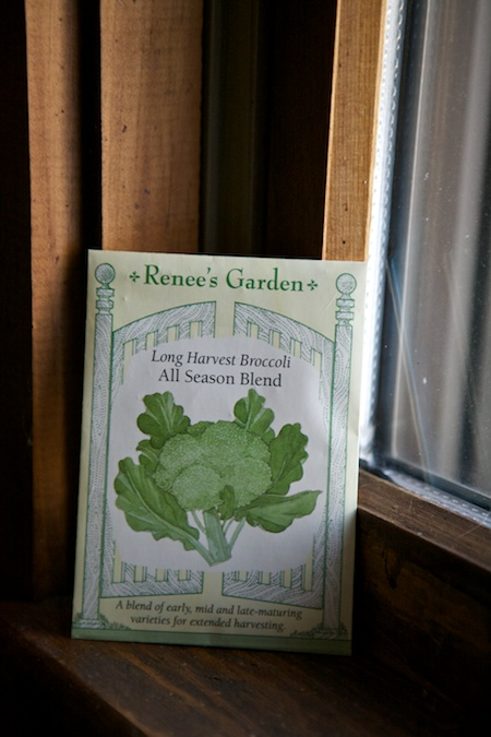 Renees garden broccoli