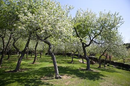 Fieldstone Gardens 2
