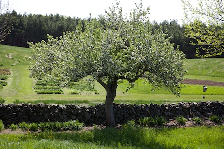 Fieldstone Gardens 3