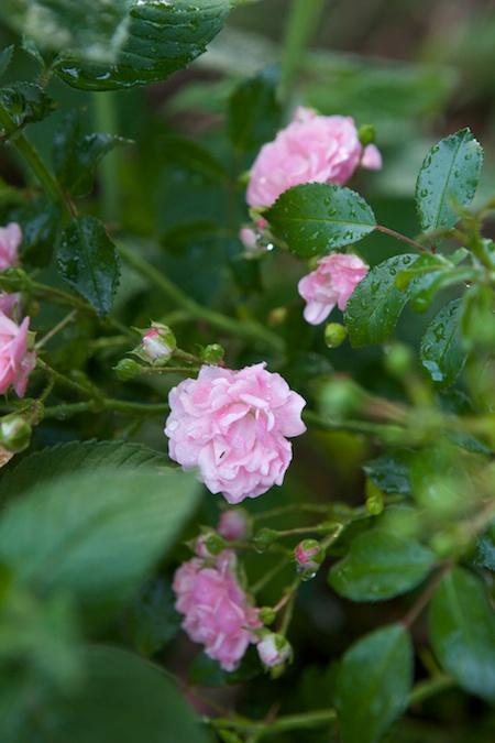 The Garden 11