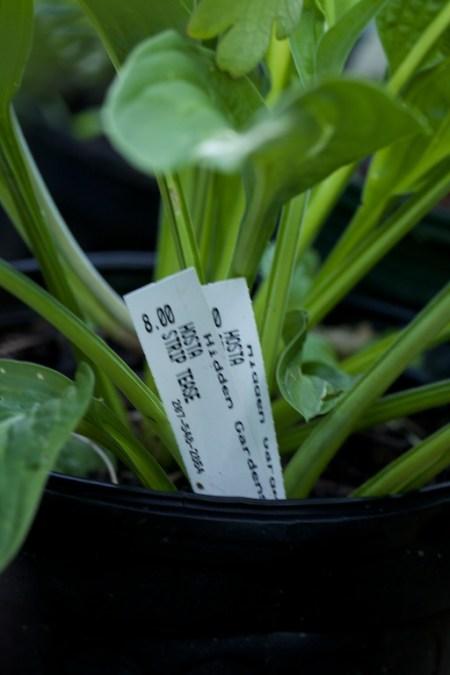 new plants from hidden gardens 14