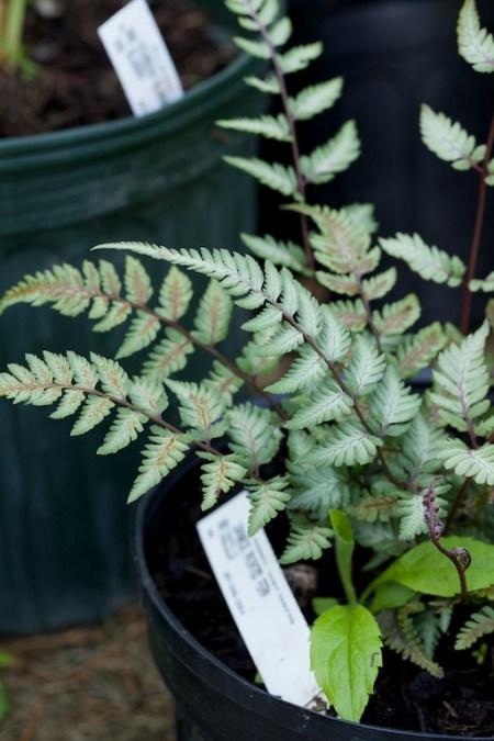 new plants from hidden gardens 5