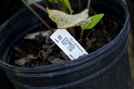 new plants from hidden gardens 7
