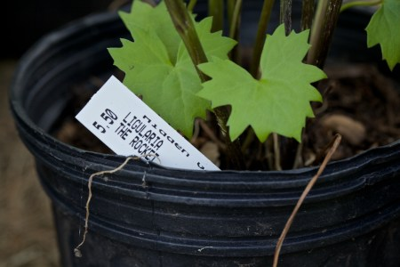 new plants from hidden gardens 9