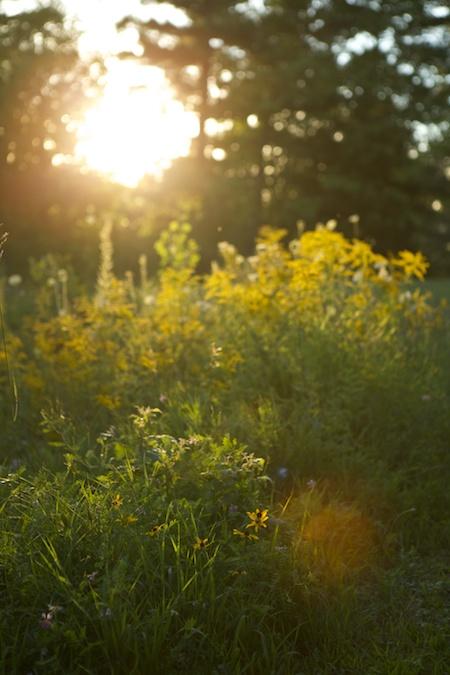 golden hour 3
