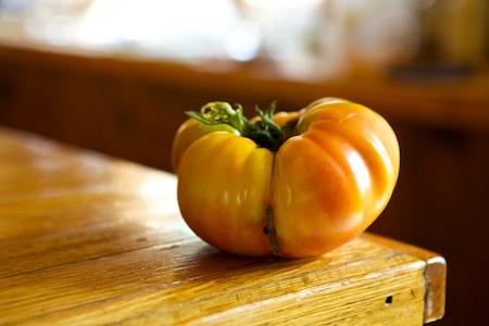Gold Medal Tomato 1