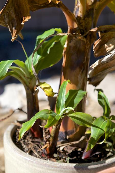 tropical houseplants 1