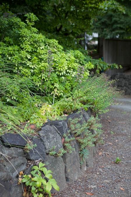 herons wood plants 3