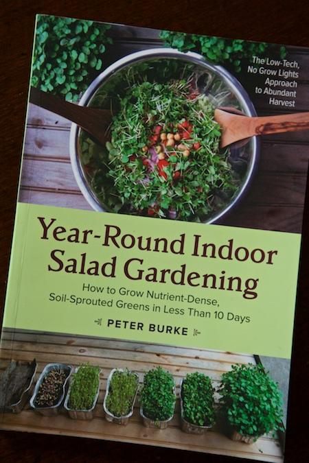 Year round indoor salad gardening 2