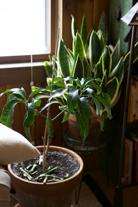 houseplants 7