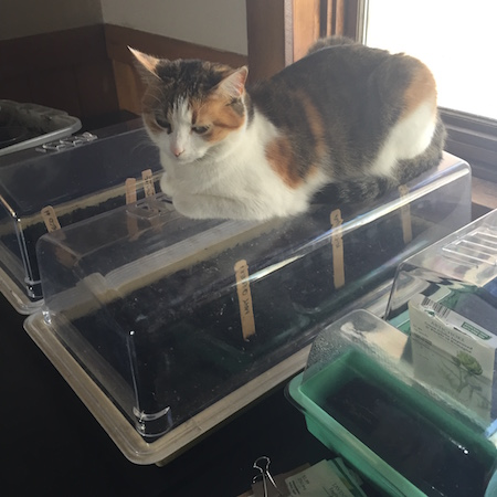 Cat on seedlings tra