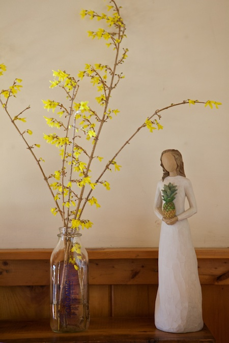 forced forsythia branches 3