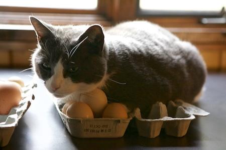 broody cat 1