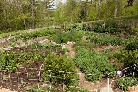 garden update 8