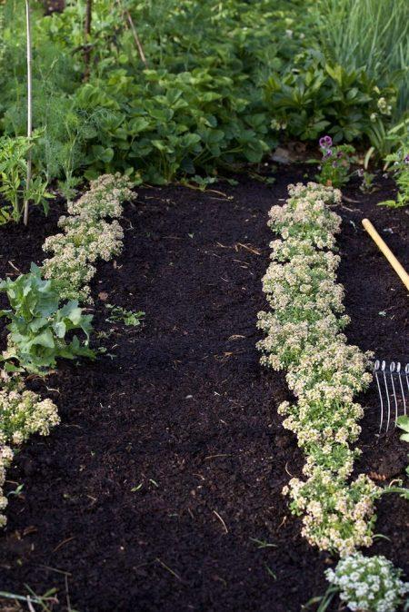 Main Vegetable Garden 7