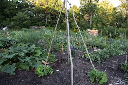 Main edible garden 6