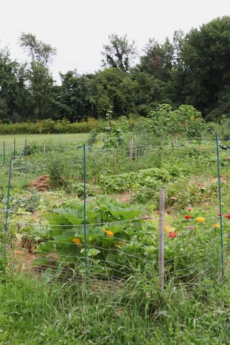 Community Garden 12