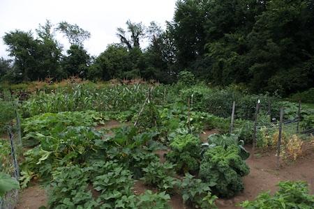 Community Garden 6