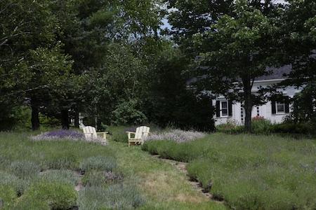 glandarragh lavender farm in maine 5