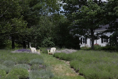 glandarragh lavender farm in maine 5