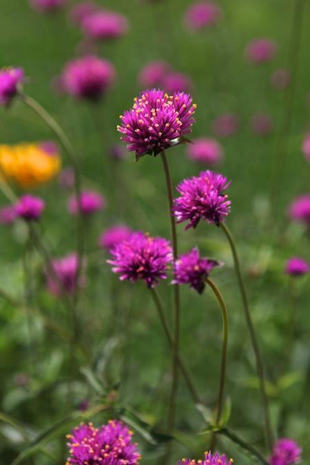 jewel toned flower mix 2