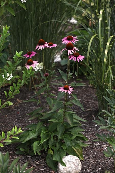 nursery garden area 3