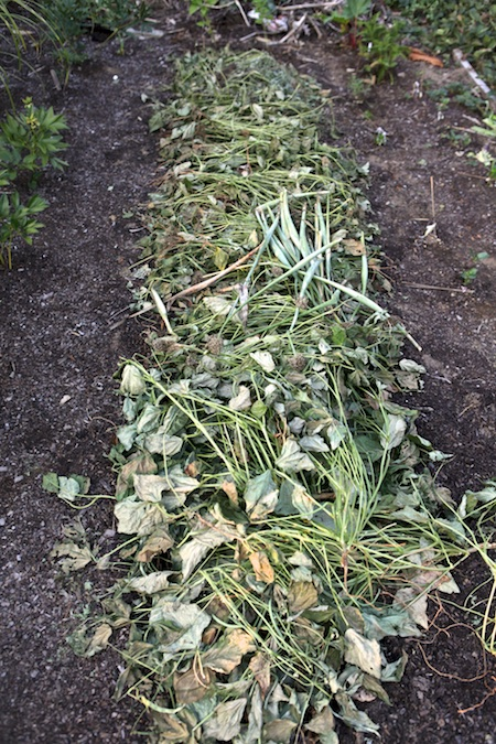 mulching with pulled plants