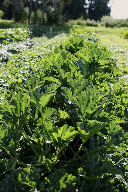 shelburne farms market garden 10