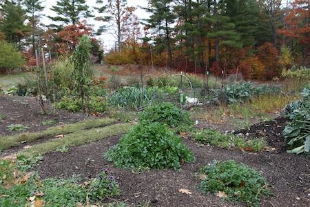fall-garden-1