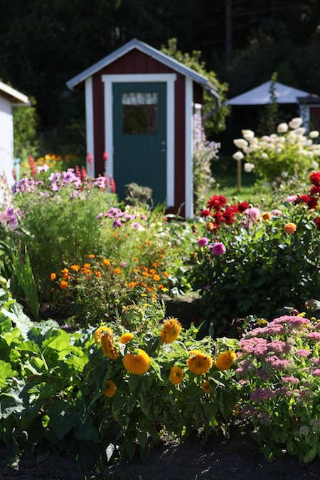 swedish-community-garden-day-4-7