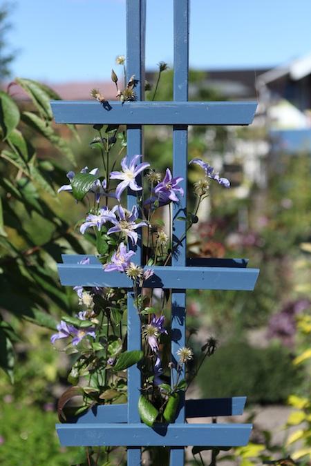 swedish_community_garden-8