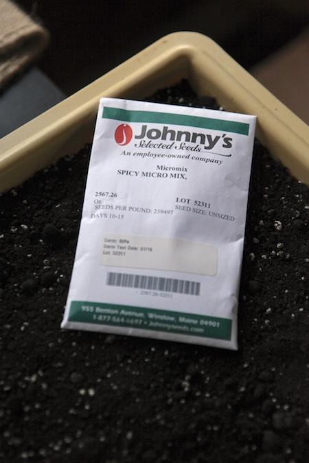 seeding-spicy-microgreens-1
