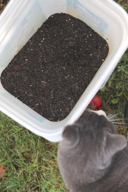 Homemade Organic Blueberry Fertilizer | Chiot's Run