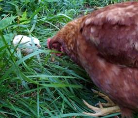 Peepachu with Mama Pickens