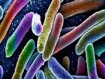 Colored_bacteria